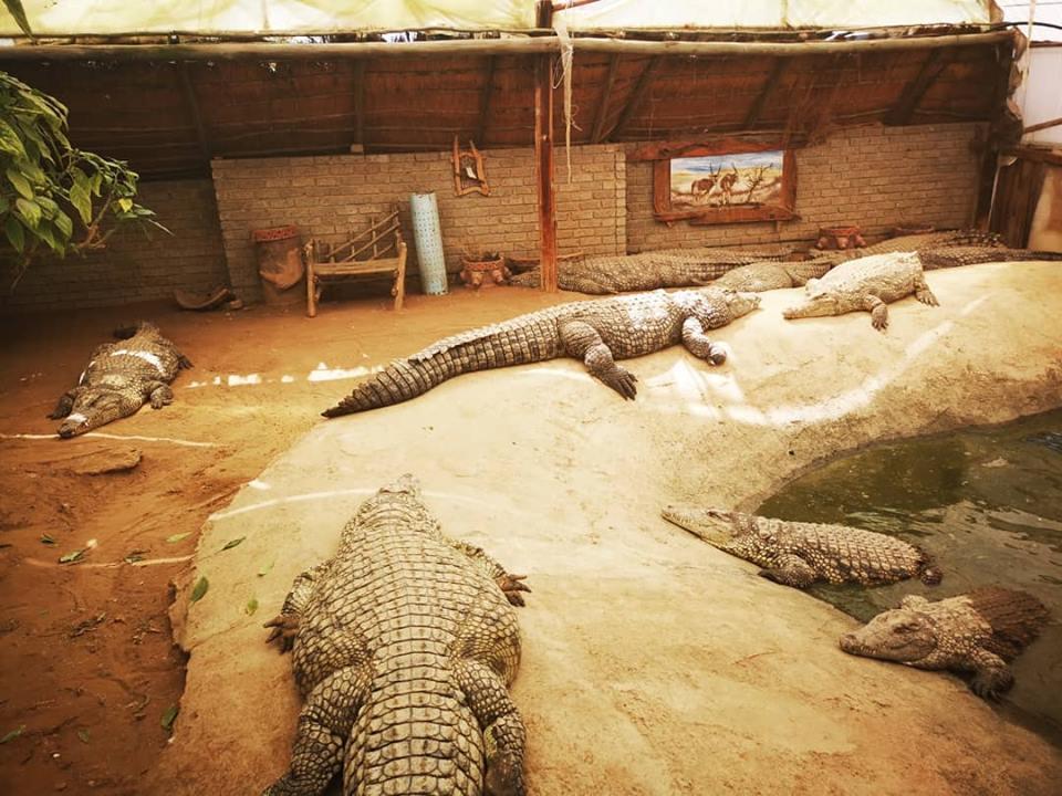 Croc Ranch Deneysville